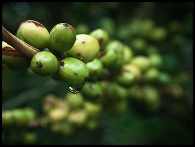 Coffee013