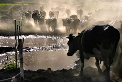 Ranch070