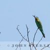 Blue-cheeked Bee-eater, Lake Victoria, Kenya