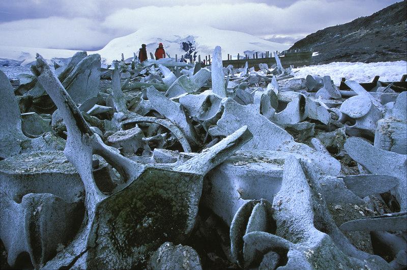Whale bones.