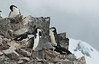 Antarctica - Half Moon Island - Watch that step!