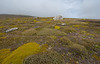 Falkland Islands - West Point Island - Colourful landscape.