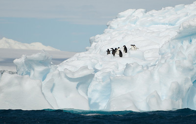 Penguins on a Iceberg.