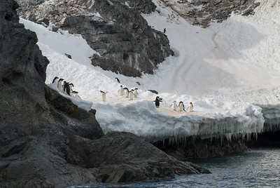 Antarctica - Gourdin Island - Penguin welcoming committee.