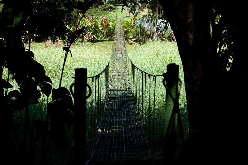 Swing bridge over swamp; Puerto Limon, Costa Rica; Bucuare Jungle Haven