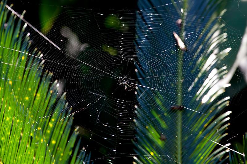 Spider,   Puerto Limon, Costa Rica;  Bucuare Jungle Haven