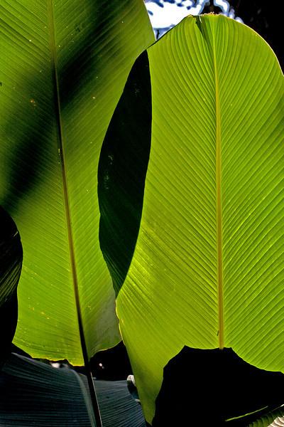 Puerto Limon, Costa Rica; Bucuare Jungle Haven
