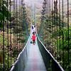 Monteverde Rain Forest