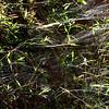 SPIDER Webs............  Puerto Limon, Costa Rica; Bucuare Jungle Haven