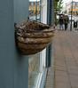 Reykjavik - Bird nest.