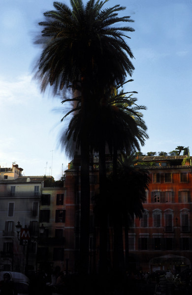 Slide Montage of some palm trees located near Spanish Steps.