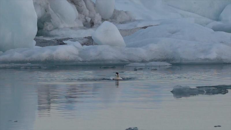 Birds Slo mo Glacier lagoon