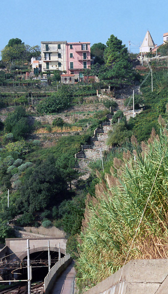 Along the path between the towns. Notice the stairs up to Corniglia.