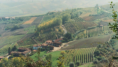 Hillside near Barolo