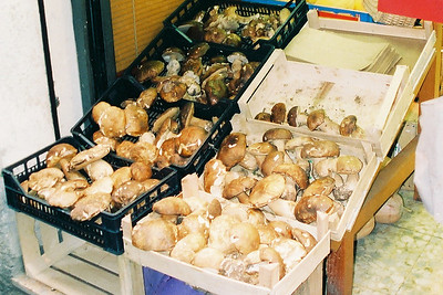 Mushrooms in Alba