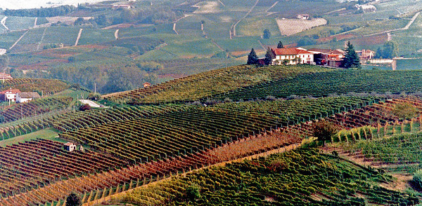 Hillside in Piedmont