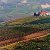 Hillside in Piedmont