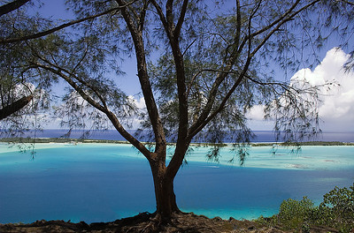Bora Bora single tree South Pacific French Polynesia