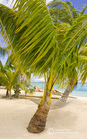 Leaning Palm tree with rope hammock on the Island of Moorea Moorea South pacific French Polynesia