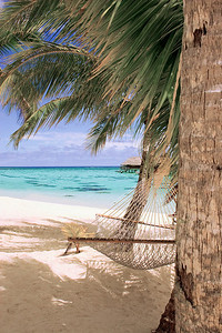 Hammock Moorea South pacific French Polynesia