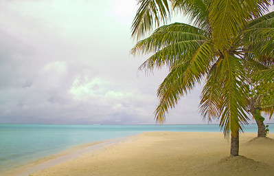 Palm tree and beach south pacific Raiatea French Polynesia