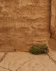 Palmyra - Plant life found in the Temple of Bel.