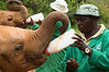 Kenya - Nairobi<br /> The elephant orphanage.<br /> Feeding time.