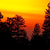 20100327_Forest Falls_0247