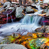 20100327_Forest Falls_0209