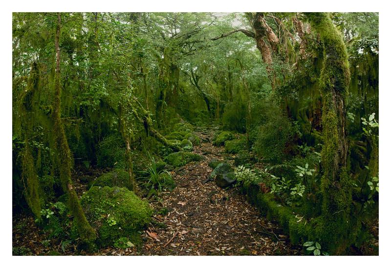 Mossy Grove