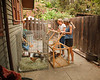 Ellen and Lizzy transferring the chickens to Andre's old dog crate