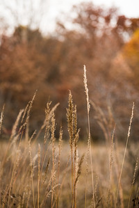 Prairie Grass Autumn (Photo by Johnny Nevin)
