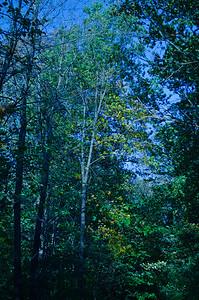 031_15 October_175_Photo-by-Johnny-Nevin