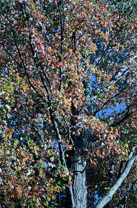 034_15 October_186_Photo-by-Johnny-Nevin