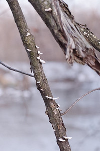Winter River Branches (Photo by Johnny Nevin)