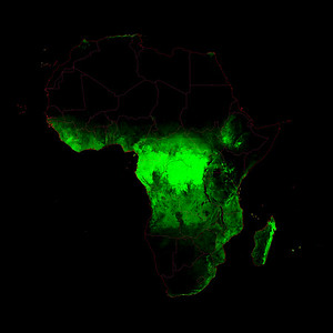 Forest cover map of Africa