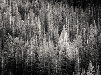 Wind River Trek, Shoshone National Forest