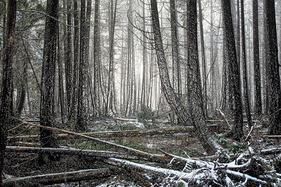 Forest Snow 3