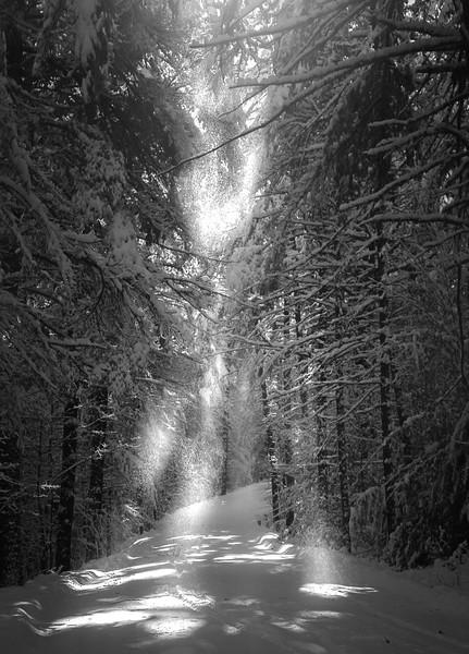 Spirits Of Winter