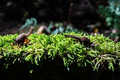 Duelling Snails