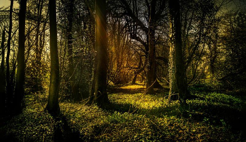 Forest Shadows-185.jpg