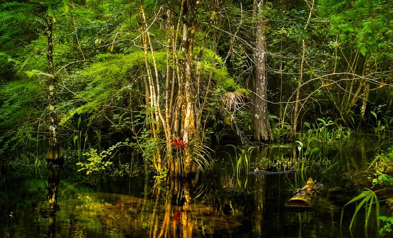 Forest Shadows-042.jpg