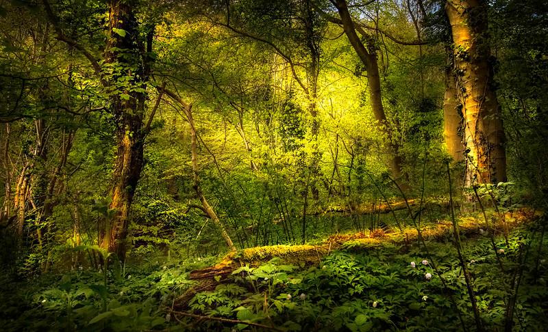 Forest Shadows-091.jpg