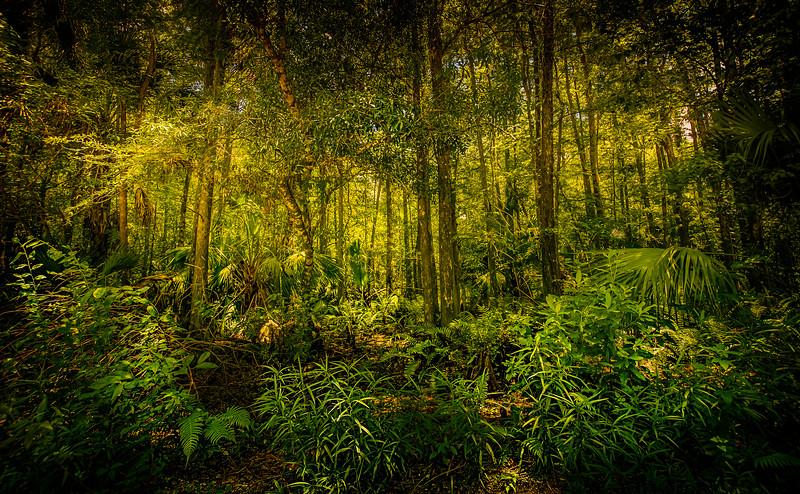 Forest Shadows-012.jpg