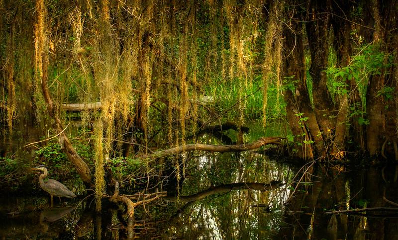 Forest Shadows-060.jpg