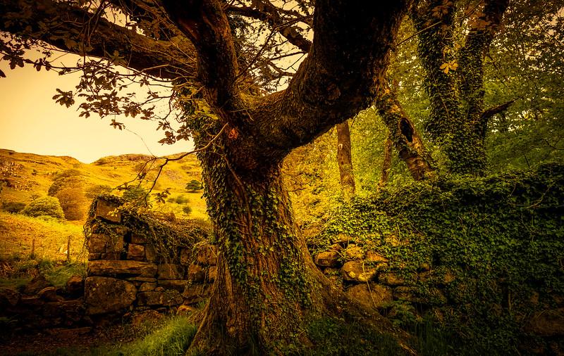 Forest Shadows-046.jpg