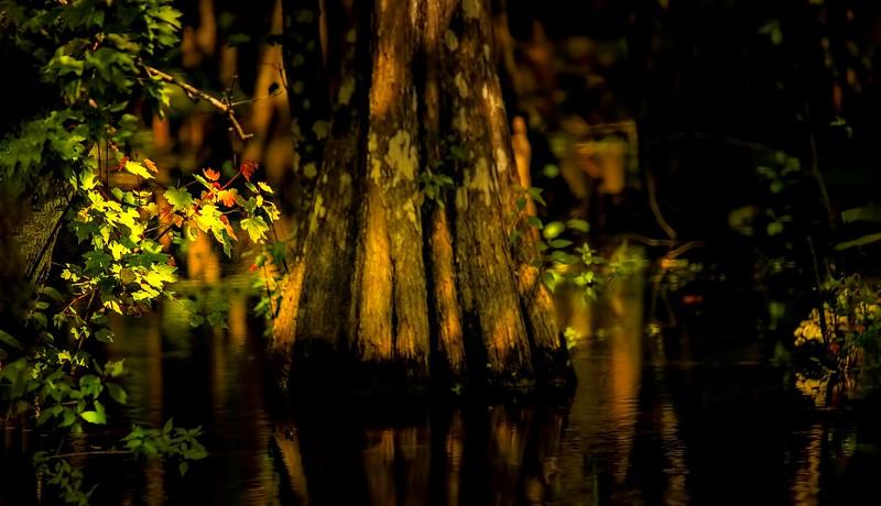 Forest Shadows-044.jpg
