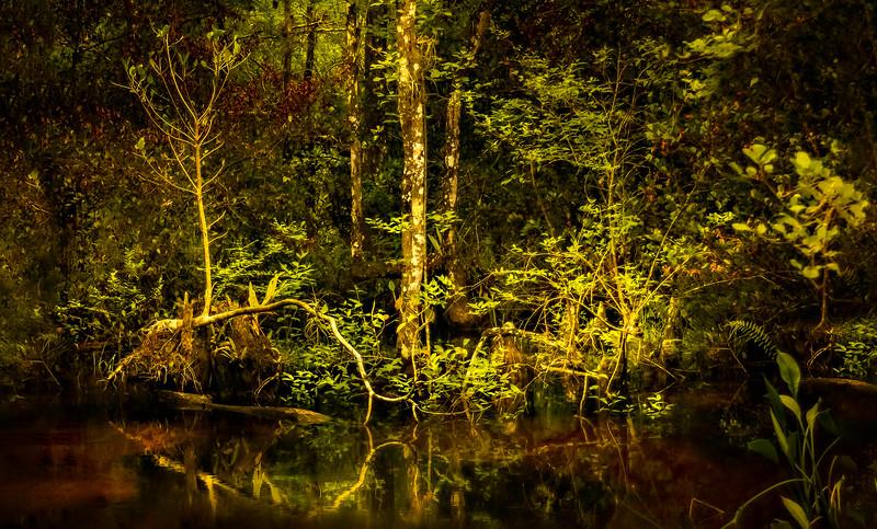 Forest Shadows-054.jpg