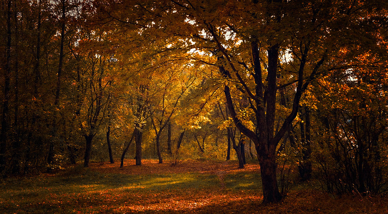 Forest Shadows-006.jpg