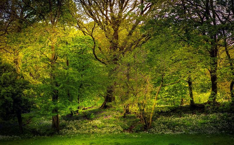Forest Shadows-035.jpg